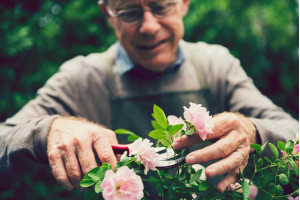 Как продлить жизнь срезанным цветам: правила и рекомендации